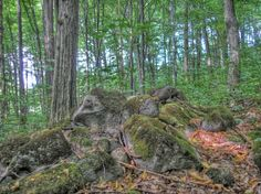 Lomy - Slovensko Firewood, Texture, Plants, Woodburning, Surface Finish, Plant, Planting, Planets, Patterns