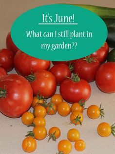 It's June! What Can I Still Plant in My Garden? via The Survival Mom -- summer vegetable gardening #summergardening #vegetablegarden #gardenseason