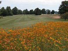Wildflowers decorate the scenery at Hominy Hill Golf Course