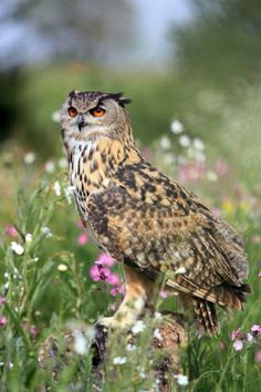 •(❤)• Eagle owl amongst wild flowers by anginelson •(❤)•