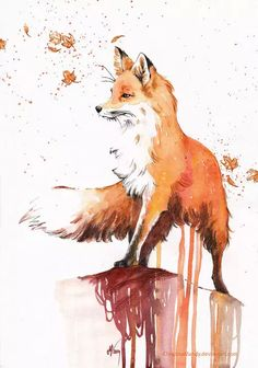 Red Fox More