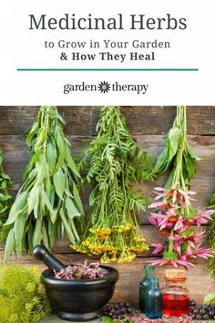 The top medicinal herbs that everyone should grow in their home garden - Fiverr Outsource - Outsource your work on Fiverr and save your time. - The top medicinal herbs that everyone should grow in their home garden Healing Herbs, Medicinal Plants, Essential Oils For Shingles, Organic Gardening, Gardening Tips, Vegetable Gardening, Homemade Bug Spray, Bug Spray Recipe, Types Of Herbs