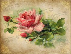 Vintage Rose 8 print printable art slightly by TMainersDesigns