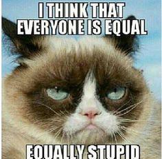 Grumpy cat pics, grumpy cat photos, grumpy cat pictures ...For more hilarious images and humor jokes visit www.bestfunnyjokes4u.com/lol-funny-cat-pic/