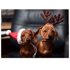 Christmas dogs <3