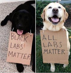 Black Labs~White Labs ~All Labs Matter