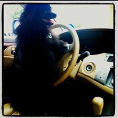 My puppy just wanted to drive!