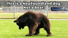 Not a bear ~ Funny pictures