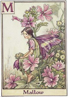 Коллекция картинок: Flower Fairies Of The Alphabet