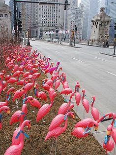 Pink Flamingos invade Chicago, Feb 28, 2007 by spudart, via Flickr