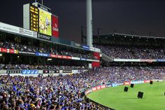 Subiaco Oval, Western Australia  Rugby crowds supporting the Western Force at Subiaco Oval.