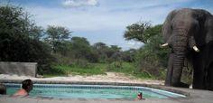 Unas personas se están bañando cuando llega un invitado muy especial - http://viral.red/elefante-y-la-piscina/