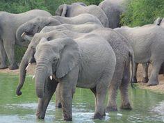 8 - 10 jours en Afrique du Sud? 5 itinéraires pour optimiser votre séjour! • POESY by Sophie Zimbabwe, Safari, Road Trip, Elephant, Travel, Animals, Children In Africa, Travel Quotes, Family Travel