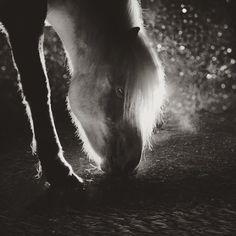 "475 gilla-markeringar, 6 kommentarer - Gígja Einarsdóttir (@gigjaeinars) på Instagram: ""I'm gonna steal a silver stallion, With not a mark upon his silky hide Teach him he can trust me…"""