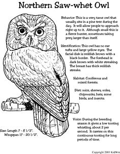 Northern Saw-whet Owl. I will own one of these in the future!