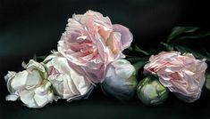 thomas darnell artist | ... by Thomas Darnell - Peonies Iv Fine Art Prints and Posters for Sale