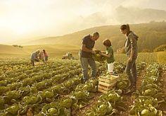 Il Ministero delle politiche agricole alimentari e forestali rende noto che, per rispondere alle esigenze degli operatori del settore di estendere il termine previsto dal piano assicurativo, è...