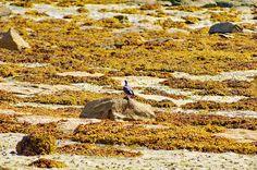Cambados Galice Espagne 96 - Illa de Arousa,