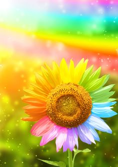 Color sunflower Stock Photo