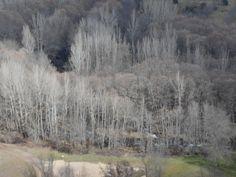 Vista desde la SPG-21 de la ribera del rio Sorbe