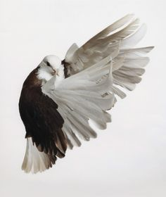 """I think I found the original source of my tattoo, and I am excited about it. (Roe Ethridge, """"Pigeon"""", 2001)"""