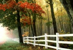 9 Excellent Tips: Farm Fence Deer fence landscaping roses.Balcony Fence Wooden garden fencing how to grow.Fence And Gates Pallets.