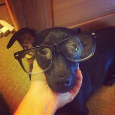 #hipster #puppy