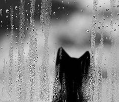 rain cat three