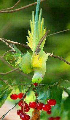 All Birds, Cute Birds, Pretty Birds, Tropical Birds, Exotic Birds, Colorful Birds, Bird Pictures, Animal Pictures, Beautiful Creatures