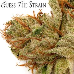 Can you guess the strain? #Trichomes #OneLove #420101