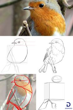 How to draw a bird - Art / Tuto dessin - Bird Drawings, Easy Drawings, Animal Drawings, Drawing Birds, Drawing Lessons, Art Lessons, Watercolor Bird, Watercolor Paintings, Simple Acrylic Paintings
