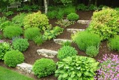 beautiful landscape slope. Low maintenance plants. Maybe succulents. Steps closer together