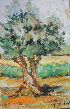 L'olivier à Collioure