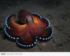 sea animals   Tumblr