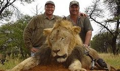 US dentist accused of killing Cecil the lion 'upset' as hunter becomes hunted - As Zimbabwean police say he faces poaching charges, Minnesota dentist Walter Palmer faces furious criticism on social media - Walter Palmer (left) and one of his previous trophy kills