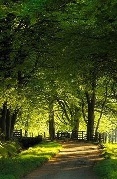 Summer Country Lane