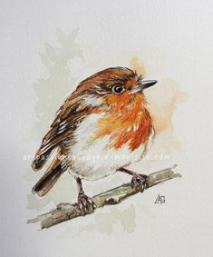 Rouge gorge aquarelle Painted Rock Animals, Painted Rocks, Watercolor Bird, Watercolor Paintings, Tiny Bird, Book Drawing, Pet Rocks, Cute Birds, Types Of Art