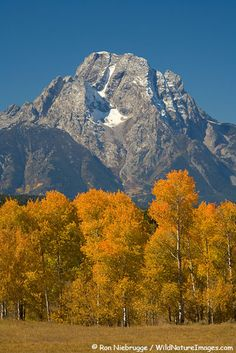 Mount Moran from Oxbow Bend, Grand Teton National Park, Wyoming  Have a shot that looks exactly like this!!!