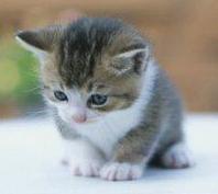 Little one...