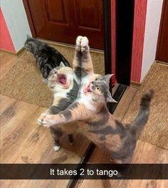 Funny Animal Jokes, Funny Cat Memes, Funny Animal Pictures, Cute Funny Animals, Cute Baby Animals, Funny Cute, Cute Cats, Hilarious, Funny Captions