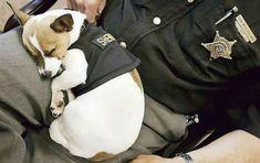 Midge the drug sniffing police dog.                              …