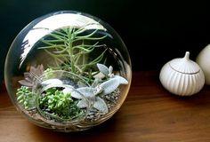 Terrarium by nanette