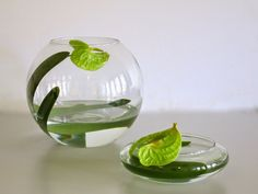 Image result for ikeaban with water