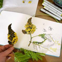 Marker Kunst, Marker Art, Watercolor Journal, Watercolor Paintings, Watercolors, Botanical Flowers, Botanical Prints, Nature Journal, Garden Journal