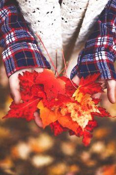 Lace | Leaves | Plaid