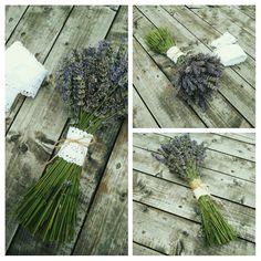 #lavanda, #lavandadehemeius, #lavender