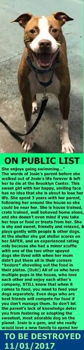 SAFE 11/01/17 --- Hello, my name is Josie. My animal id is #10210. I am a desexed female brown brindle dog at the Brooklyn Animal Care Center. The shelter thinks I am about 4 years 1 weeks old.  I came into the shelter as a owner surrender on 19-Oct-2017, with the surrender reason stated as animal behaviour – not good with resident animals.  http://nycdogs.urgentpodr.org/josie-10210/