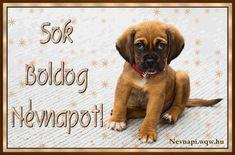 Name Day, Birthday, Dogs, Animales, Birthdays, Saint Name Day, Pet Dogs, Doggies, Dirt Bike Birthday