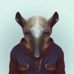 ANTEATER by Yago Partal  for ZOO PORTRAITS