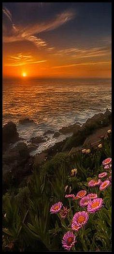 California - Big Sur, CA - Coastal Sunset - Aster flowers #photo by Kris Walkowski #usa america landscape nature amazing